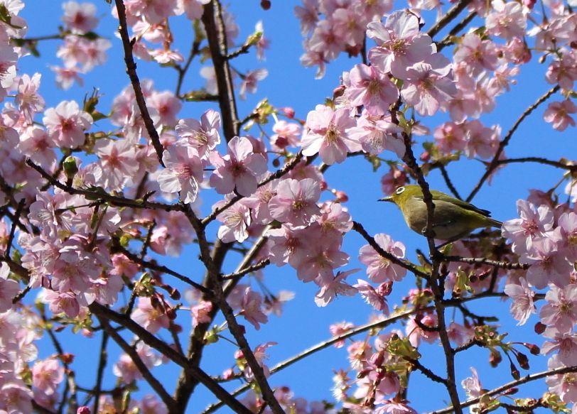 お花見ステイはココ!上野「センチュリオンレディースホステル上野公園」