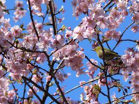 お花見ステイはココ!上野「センチュリオンレディースホステル上野公園」|東京都|トラベルjp<たびねす>