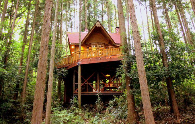 那須郡「サンタヒルズ」ツリーハウス&サンタの家でフォトジェニックなXmasステイ