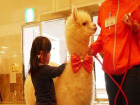 アルパカがお出迎え!「ホテルエピナール那須」でキッズに忘れられない思い出を!