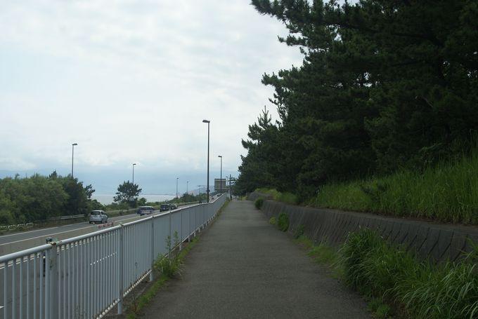 ロケーション抜群のサイクリングロード!太平洋岸自転車道