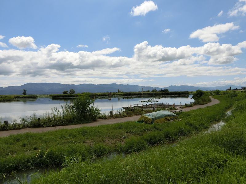 此処は新潟!天然記念物の野鳥が飛来する水の公園「福島潟」
