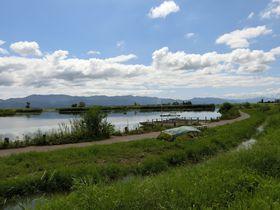 此処は新潟!天然記念物の野鳥が飛来する水の公園「福島潟」|新潟県|トラベルjp<たびねす>
