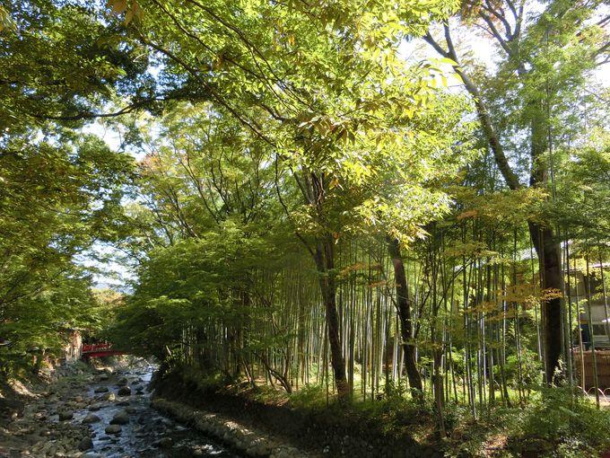 伊豆の小京都「修善寺」で外せない観光スポットとは?