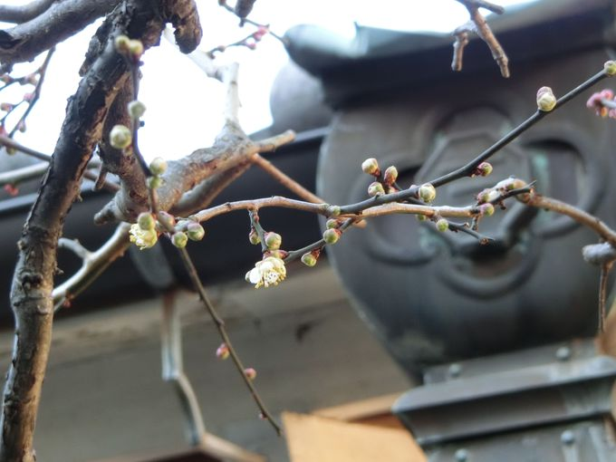 隠れた花の名所!四季を通じて楽しめる別名「シャクナゲ寺」
