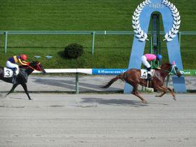 馬の鼓動を間近で感じよう!日本最大の広さを誇る盛岡競馬場|岩手県|トラベルjp<たびねす>