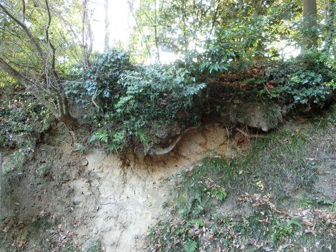 道標は小さな石碑。3つの庵を通って目的地の洞門を目指す!