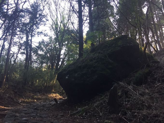 もはや街道ではなく、山道。木々のエネルギーを存分に吸収!