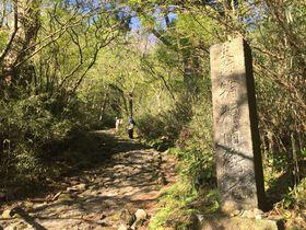 「旧箱根街道」は今も難所?幾多の旅人が踏みしめた石畳を歩こう|神奈川県|トラベルjp<たびねす>