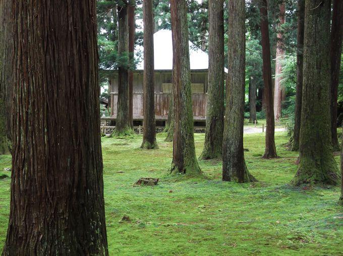 白山神社の拝殿も木々と苔に囲まれて
