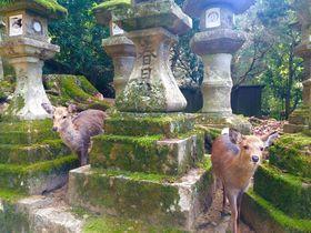 「ホテルアジール・奈良」で古都奈良の魅力と温もりを感じて