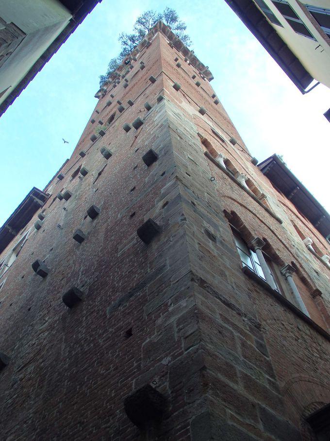 最上階には樹齢100年の木が茂るグイニージの塔