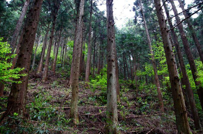 林業体験で学ぶ山のこと。