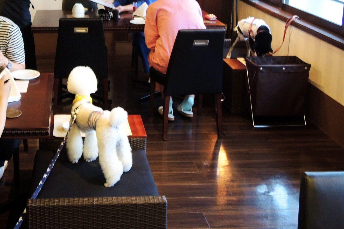 伊豆高原のワンちゃん目線リゾート「愛犬お宿」はヒトにも優しいホテル!