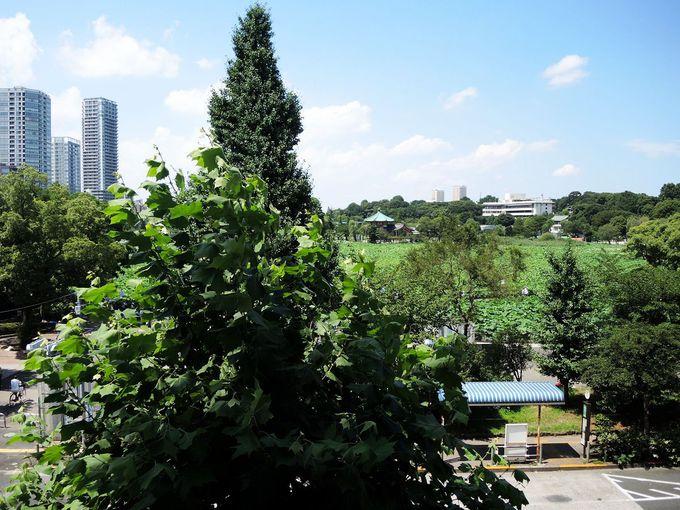 ホテル・観光の注目エリア「上野」