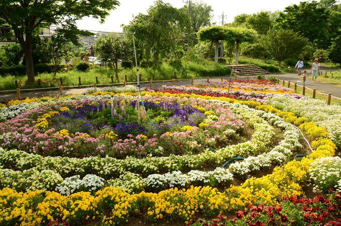 蘆花恒春園の花の丘では四季折々の花々が咲く