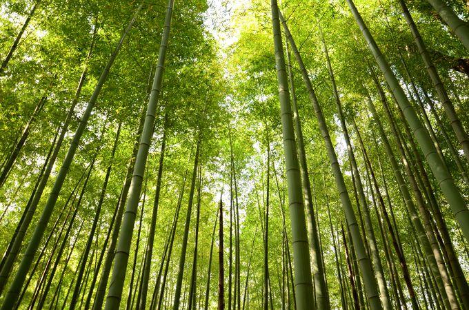 蘆花恒春園は徳冨蘆花の愛した自然がいっぱい