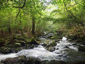 清流と自然林がつくり出す繊細な景観、京都「るり渓」で身も心も癒やされよう|京都府|トラベルjp<たびねす>