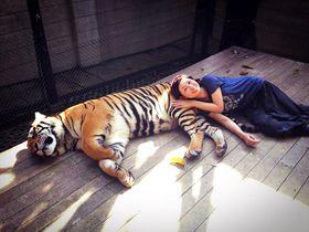 猫好き必見!チェンマイ郊外にある「タイガーキングダム」でトラと触れ合おう