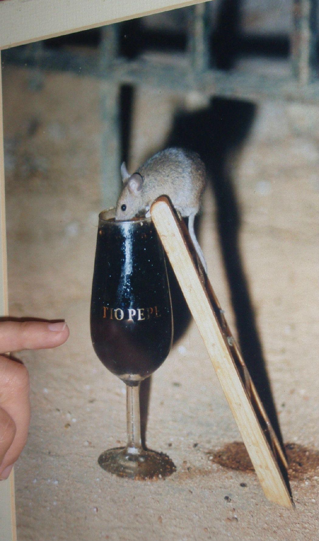 蔵の見張り番は小さなネズミ