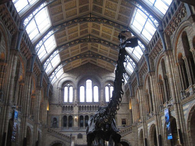 玄関ホールに入ると出迎えてくれる「巨大恐竜の化石」