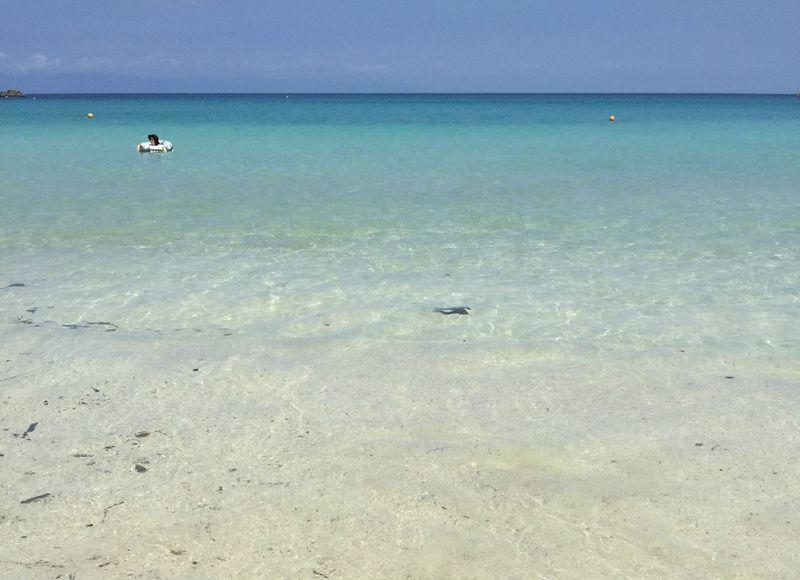 夏以外にも訪れたい、芸能人にも愛される「種子島」