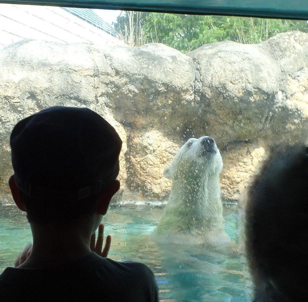 約130種900の動物が待っている「動物園ゾーン」