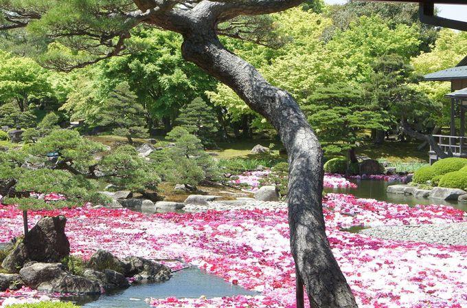 由志園には日本庭園という枠にとどまらない魅力あり