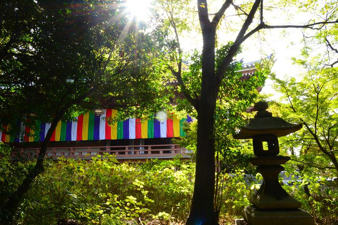 京都市内で、普通では味わえない宿坊体験