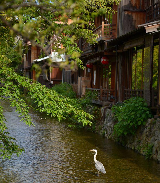 歴史ある、京都の一大歓楽街