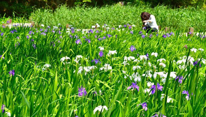 国内有数の紫陽花の名所だけでなく、途切れることのない「花ごよみ」