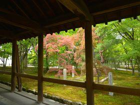 紅葉だけじゃない!緑の季節も美しい京都「東福寺」