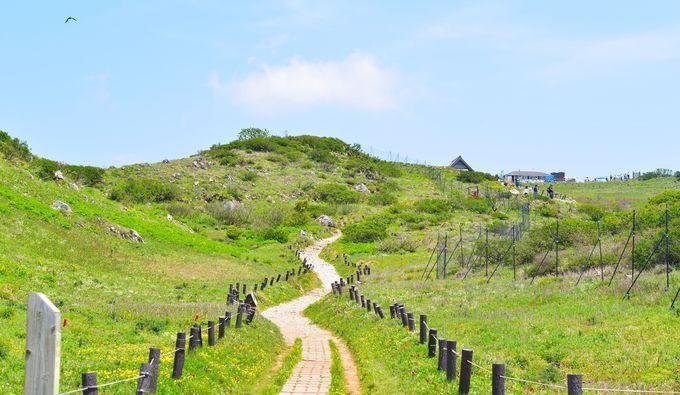 登りにおすすめは西登山道
