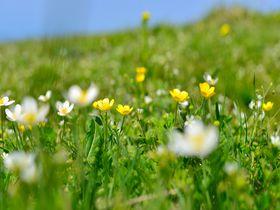 山頂は高山植物のお花畑!滋賀県「伊吹山」へはドライブウエイで楽々|滋賀県|トラベルjp<たびねす>