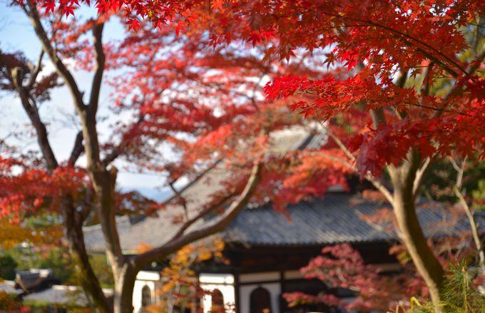 龍の背が、いっそう華やかになる秋