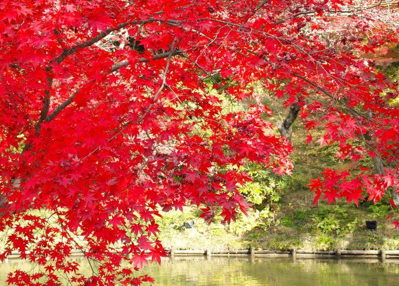 """鮮烈な紅に酔う!京都・高台寺で出会う北政所""""ねね""""の思いを秘めた秋景色"""