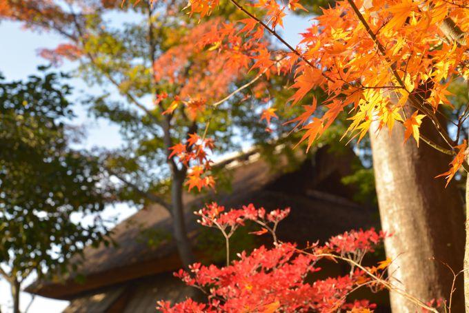 大坂城の落城を見届けた、利休意匠の茶室のそば