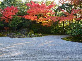 北政所ねねが余生を過ごした京都・圓徳院~色づく葉の中で秀吉ゆかりのお茶も!|京都府|トラベルjp<たびねす>