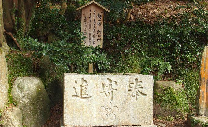 梅咲きほこる 北神苑