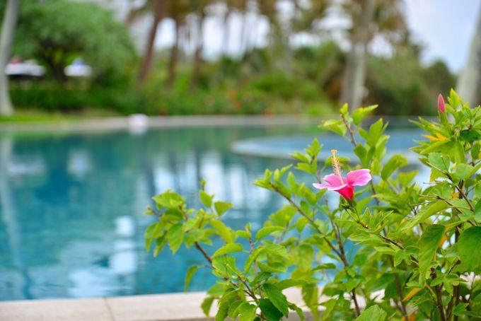 屋内にもあふれる 沖縄の濃密な緑