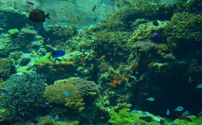 自然光と海水の中できらめく熱帯魚たち