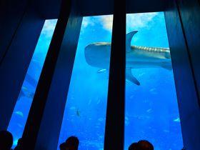 気分は海の底!美ら海水族館のおすすめカフェ「OCEAN BLUE」|沖縄県|トラベルjp<たびねす>