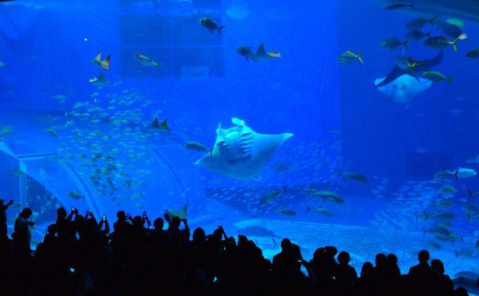 巨大水槽「黒潮の海」