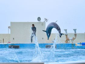 海洋博公園まで7分!沖縄「本部グリーンパークホテル」でリーズナブルステイ|沖縄県|トラベルjp<たびねす>