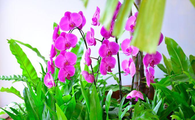 鮮やかな蘭が咲き誇る館内