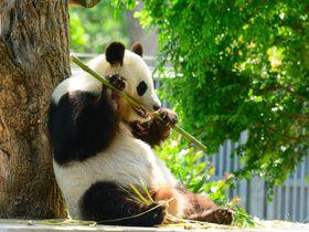 パンダに コアラに 異人館!神戸市立王子動物園を丸ごと楽しむ|兵庫県|トラベルjp<たびねす>