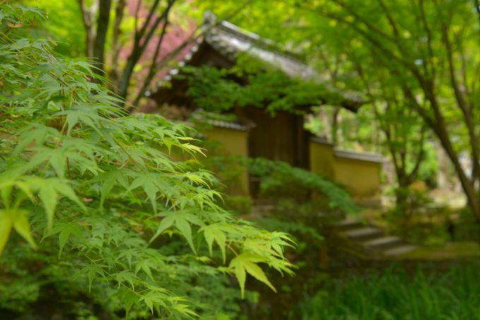 命を賭した日本への道