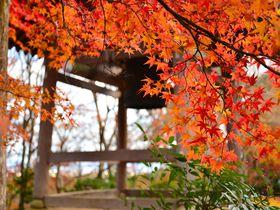 竹林と紅葉の競艶!嵯峨野・小倉山の古刹「常寂光寺」