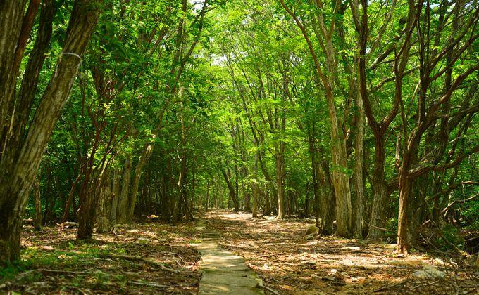 『ノルウェイの森』撮影地!兵庫「峰山高原ホテルリラクシア」で高原リゾート