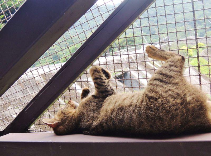 世界6大猫スポット!台湾の猫村「ホウトン」へ猫旅いかが?